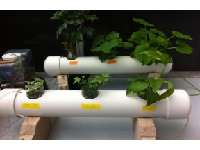 Green Roof with Automated Hydroponic System