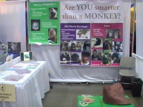 Are You Smarter Than a Monkey?