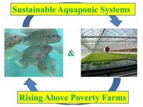Sustainable Aquaponic Systems in Atlanta, GA