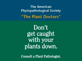 Plants Get Sick Too!